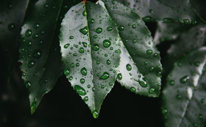 la zénitude de la pluie